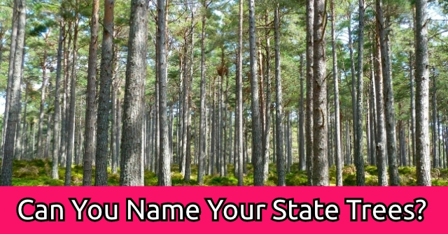 Can You Name Your State Trees?