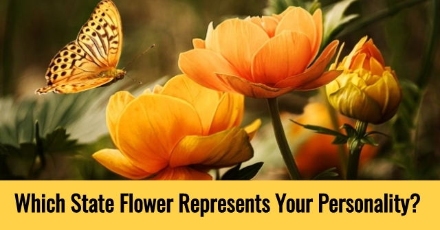 Which State Flower Represents Your Personality?