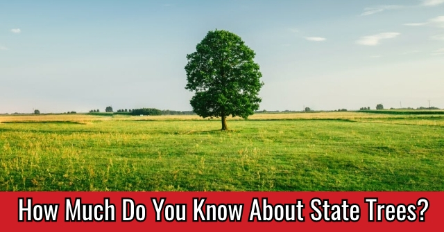 How Much Do You Know About State Trees?