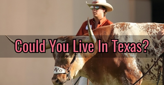 Could You Live In Texas?