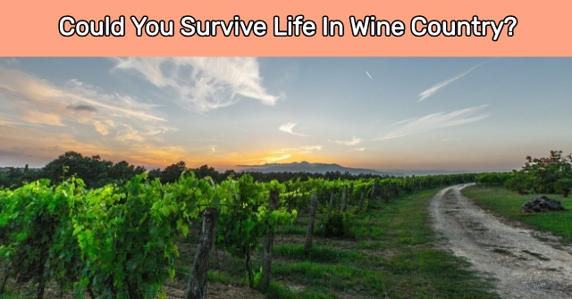 Could You Survive Life In Wine Country?