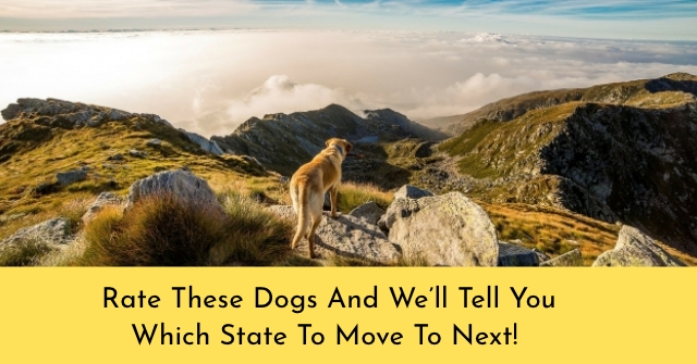 Rate These Dogs And We'll Tell You Which State To Move To Next!